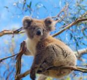 留学澳洲前,了解一下澳洲的生活!