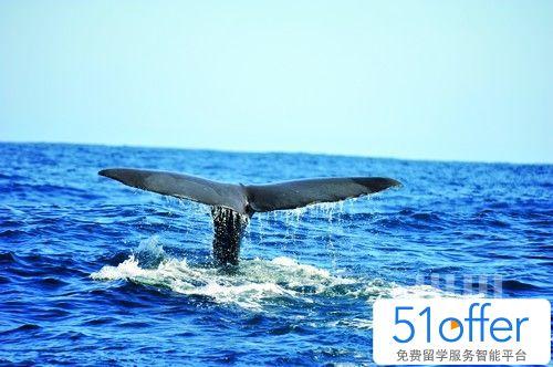 鲸鱼告诉我的事