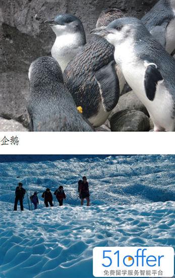 可爱企鹅图片大全